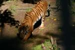 Zoo2004 001