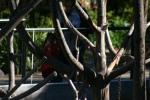 Zoo2004 008
