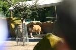 Zoo2004 013