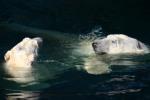 Zoo2004 020