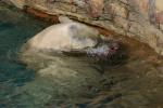 Zoo2004 030