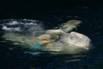 Zoo2004 037
