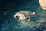 Zoo2004 045