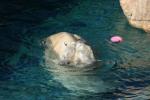 Zoo2004 046