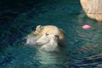 Zoo2004 047