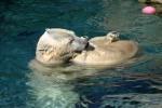 Zoo2004 048