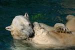 Zoo2004 049