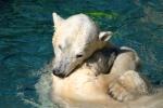Zoo2004 050