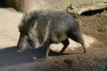 Zoo2004 054
