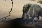 Zoo2004 055