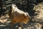 Zoo2004 059
