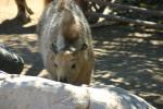 Zoo2004 063