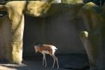 Zoo2004 069