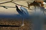 Zoo2004 070