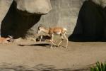 Zoo2004 073