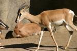 Zoo2004 074