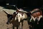 Zoo2004 079
