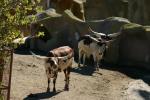 Zoo2004 084