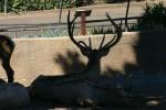 Zoo2004 089