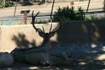 Zoo2004 090
