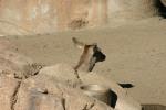 Zoo2004 091