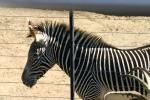 Zoo2004 098