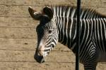 Zoo2004 099