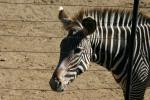Zoo2004 100