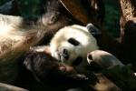 Zoo2004 101