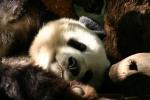 Zoo2004 103