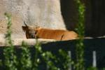 Zoo2004 106