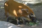 Zoo2004 107
