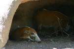 Zoo2004 108