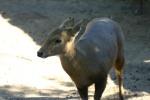 Zoo2004 112