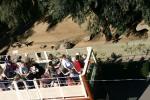 Zoo2004 115