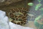 Zoo2004 134