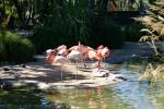 Zoo2004 145