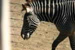 Zoo2004 148