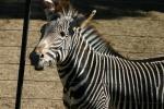 Zoo2004 149