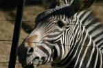 Zoo2004 150