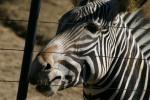 Zoo2004 151