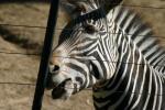 Zoo2004 152