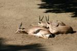 Zoo2004 154
