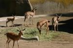 Zoo2004 156