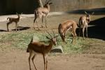 Zoo2004 157