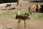 Zoo2004 158