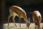 Zoo2004 160