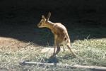 Zoo2004 161
