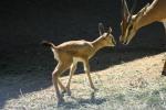 Zoo2004 165