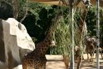 Zoo2004 170